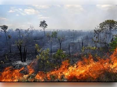 Canavieiras: Conheça a legislação sobre queimadas no município